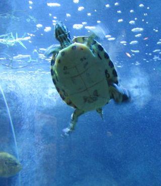 Museum-Turtle