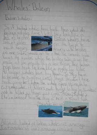 BaleenWhales